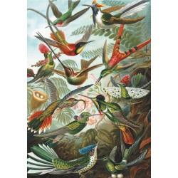 Puzzle 1000pcs - colibris