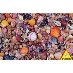 Puzzle 1000pcs - Coquillages